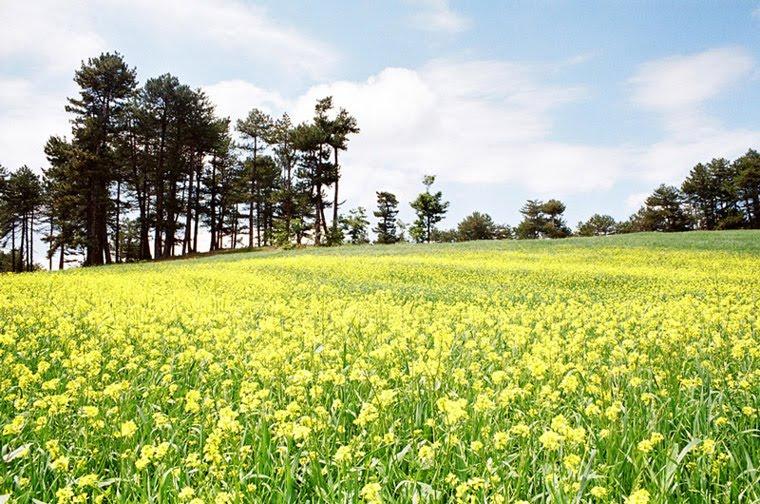 Bahar'da çiçek açmaya hazır mısınız?