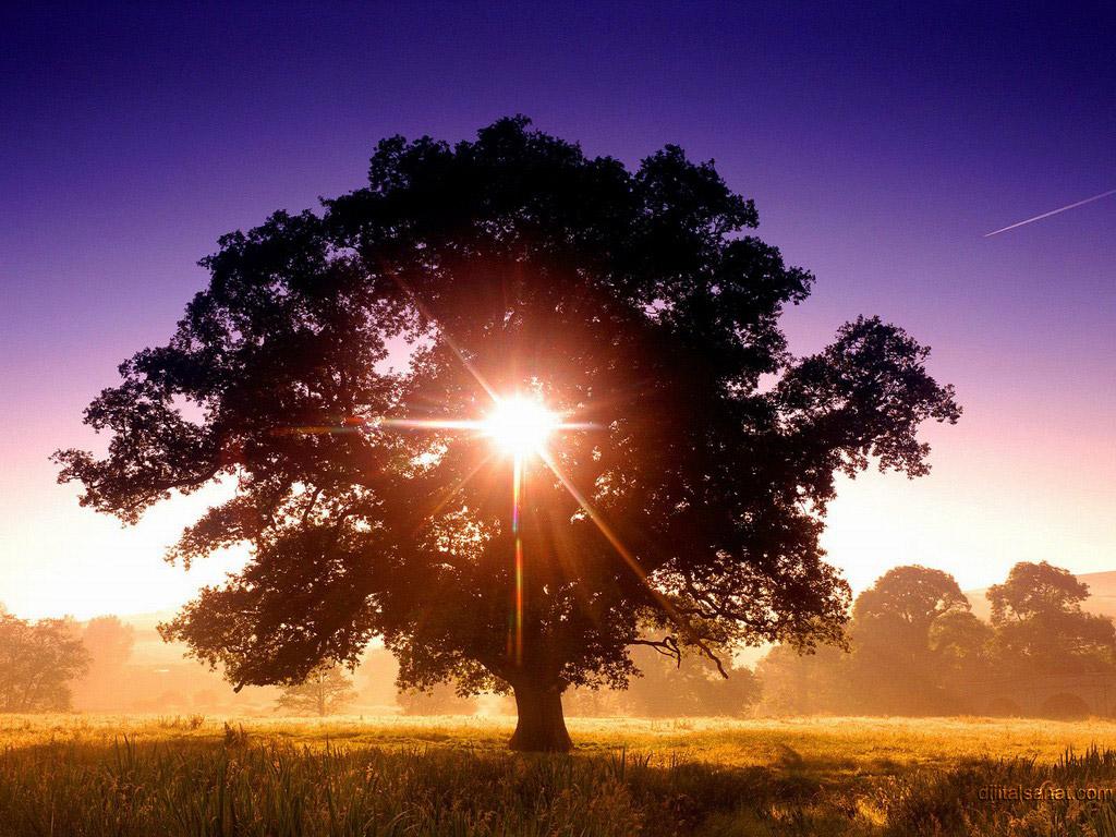 Güneşli ayrıntılar…